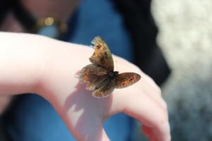 butterfly-1179966_1920